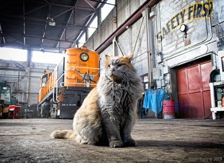 Dirt the Cat - King of the NNRY Locomotive Overhaul Facility